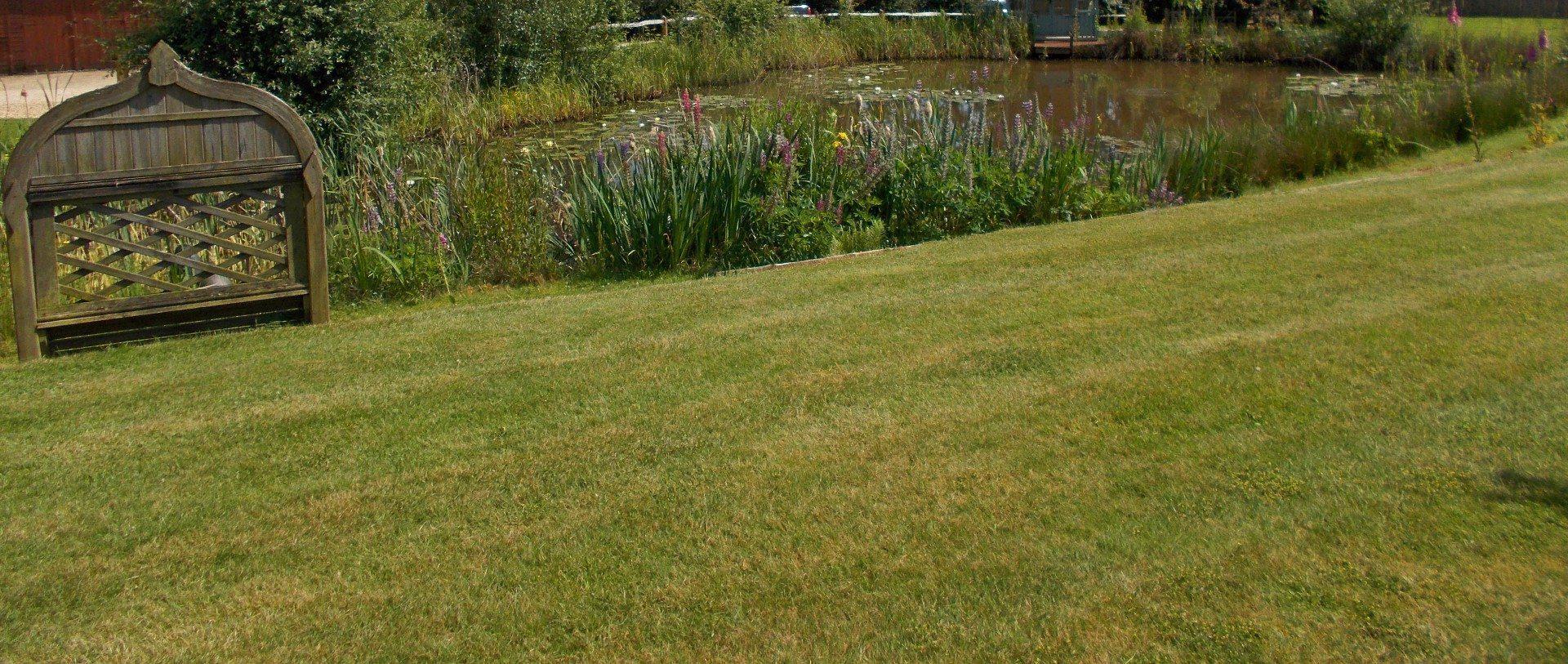 GRASS  Large