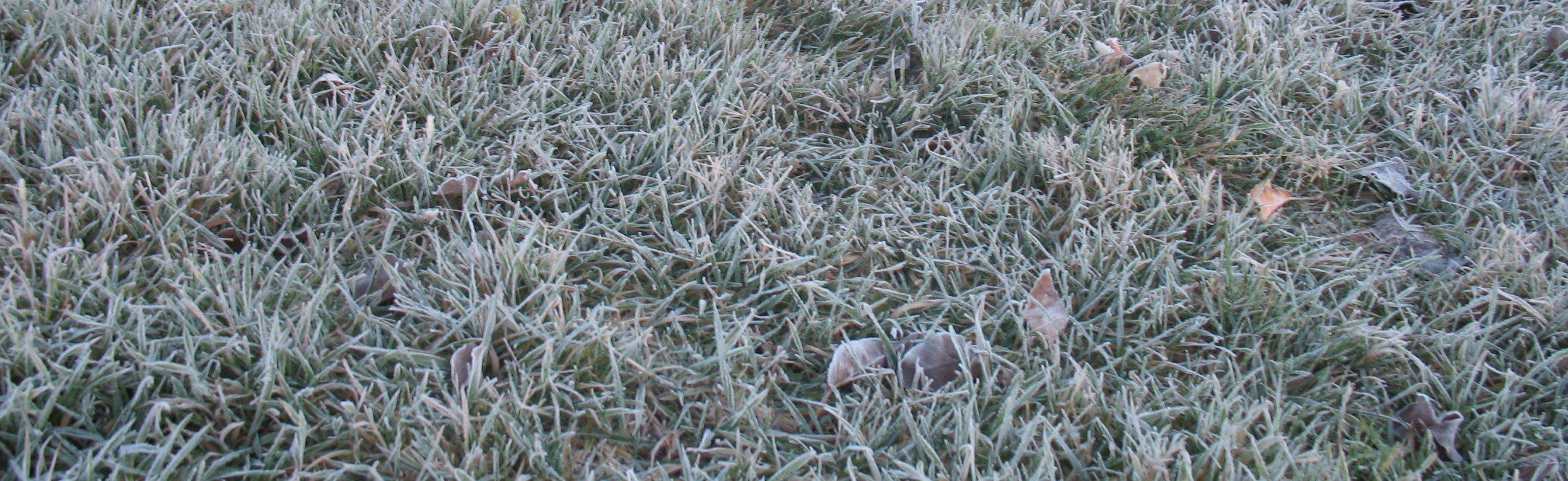 fts frosty grass