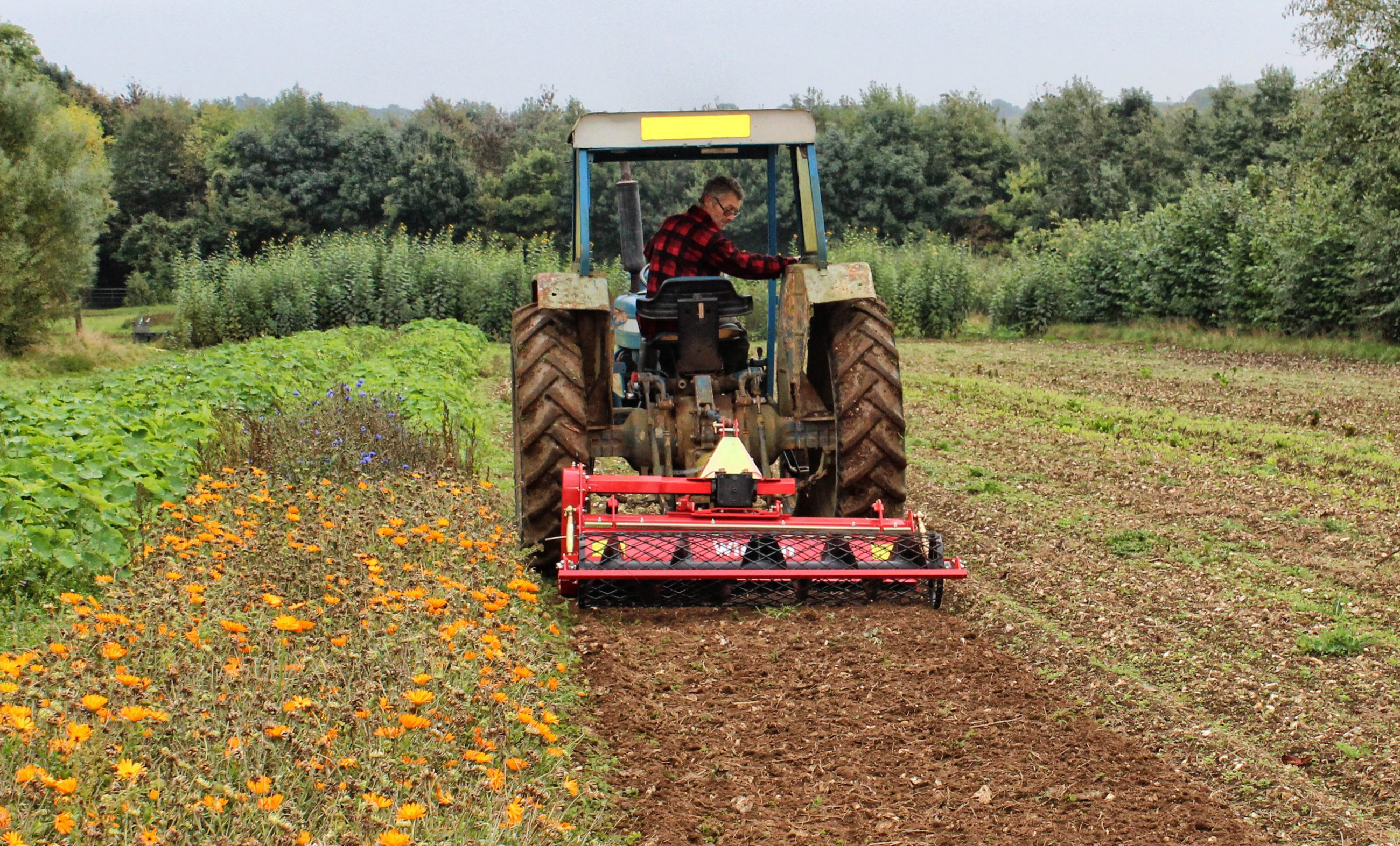 Make a success of a vegetable box scheme, Winton Stone Burier at Northdown Orchard